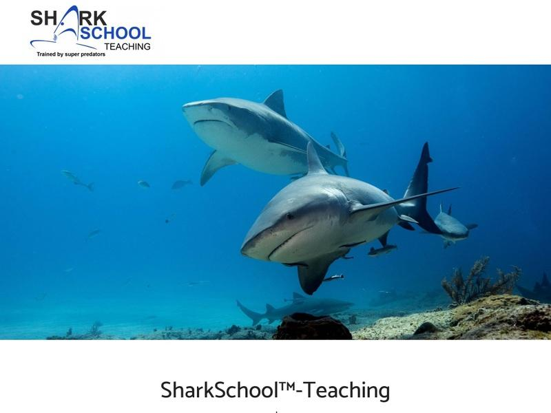 Screenshot von www.SharkSchool-Teaching.org